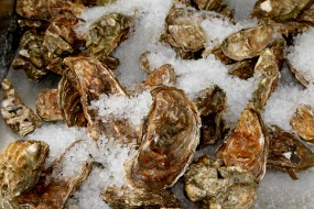 Whitstable (Kent UK) Oysters on ice